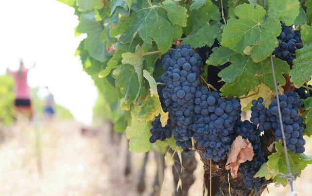 181017_ワイン